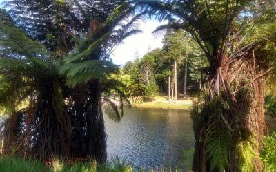 Auckland a iné zaujímavosti