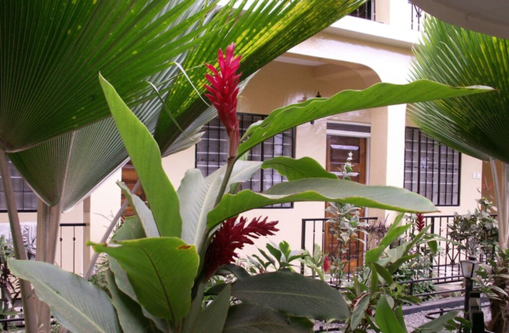 hotelik v Moshi