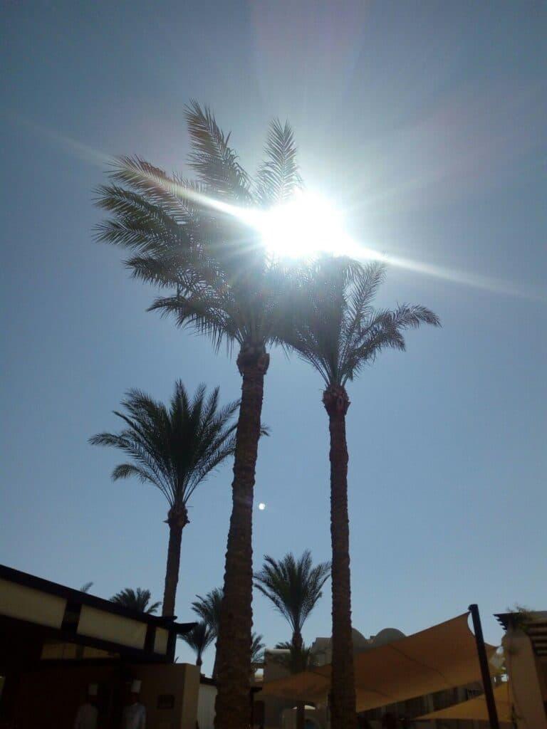 palmy a slnko