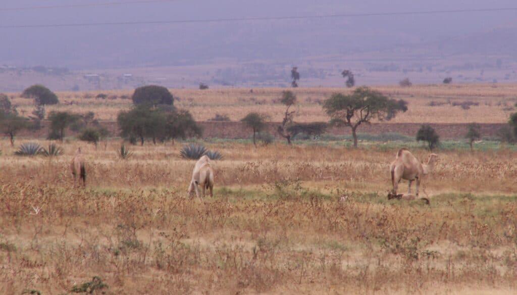cestou do Ngorongoro